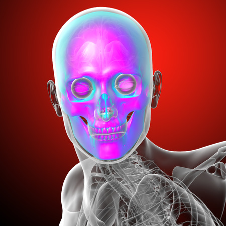 ethmoid: 3d render medical illustration of the human skull - front view