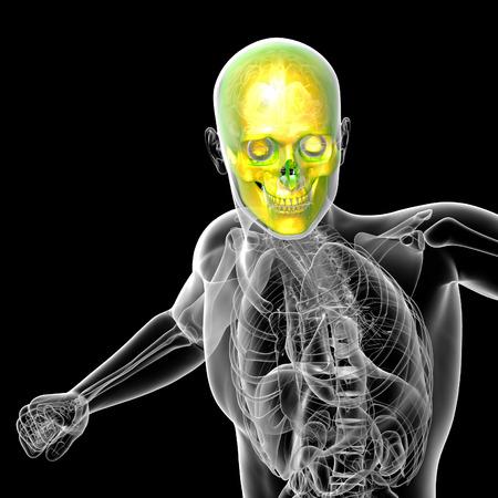 maxilla: 3d render medical illustration of the human skull - front view