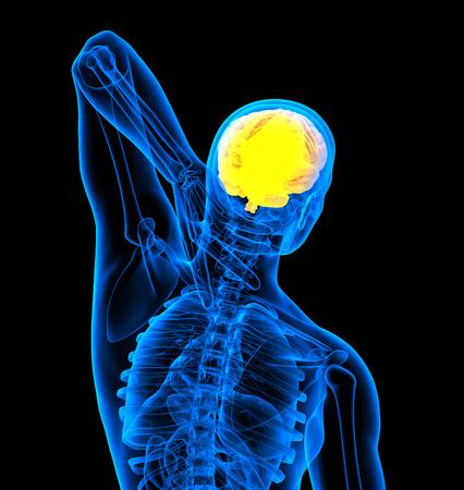 hipofisis: 3d ilustraci�n m�dica del cerebro humano - vista posterior Foto de archivo