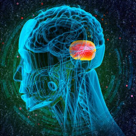hipofisis: 3d ilustraci�n m�dica del cerebro cerebro humano - vista lateral