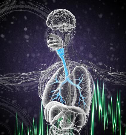 bronchi: Ilustraci�n m�dica en 3D de los bronquios masculinos - vista lateral