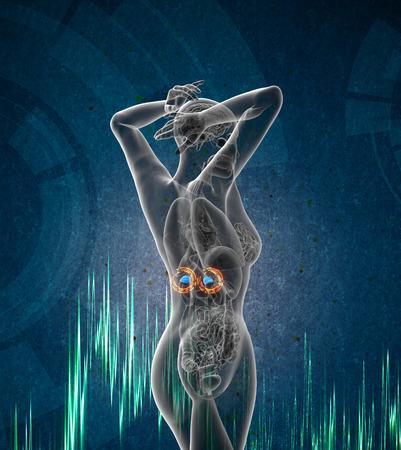 3d render medical illustration of the adrenal - side view