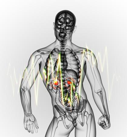 adrenal: 3d render medical illustration of the  adrenal  pain - back view