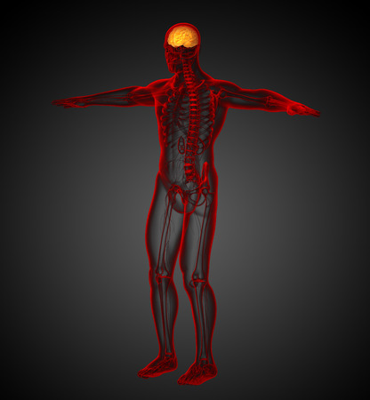 hipofisis: 3d ilustraci�n m�dica del cerebro - vista lateral Foto de archivo