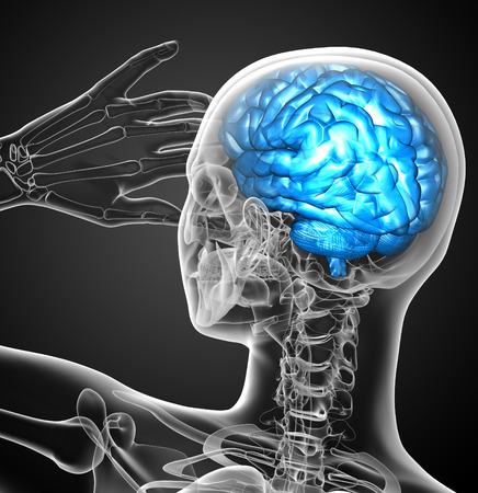 hipofisis: 3d ilustraci�n m�dica del cerebro - vista posterior