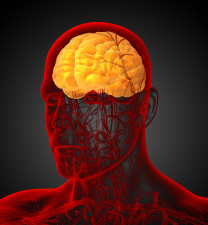 olfactory: 3d render medical illustration of the brain - side view