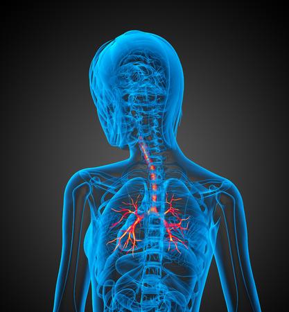bronchi: Ilustraci�n m�dica en 3D de los bronquios - vista posterior Foto de archivo