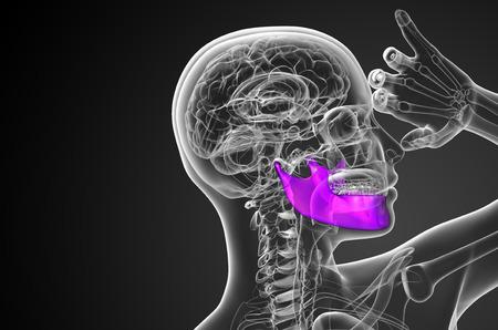 mandible: 3d rendered illustration - jaw bone - side view