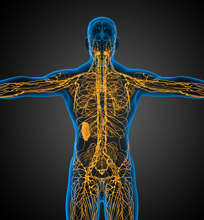 nodding: 3d render medical illustration of the lymphatic system - back view