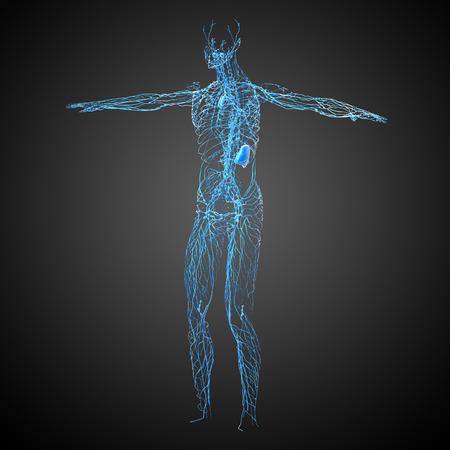 nodding: 3d render medical illustration of the lymphatic system - side view