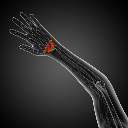 proximal: 3d rendered illustration of the human carpal bones - top view
