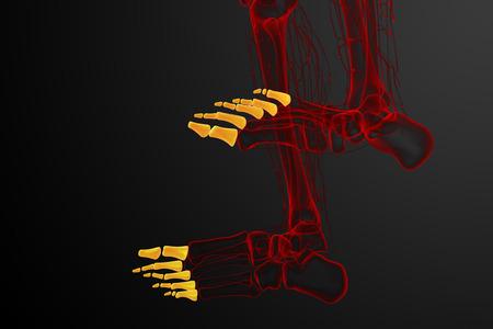 phalanges: 3d render medical illustration of the phalanges foot - bottom view