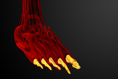 physiology: 3d render medical illustration of the phalanges foot - front view