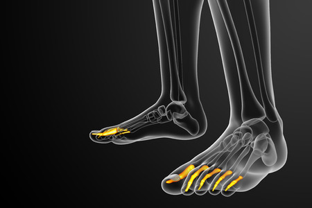 phalanges: 3d render medical illustration of the phalanges foot - side view Stock Photo