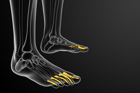 phalanges: 3d render medical illustration of the phalanges foot - side view Stock Photo