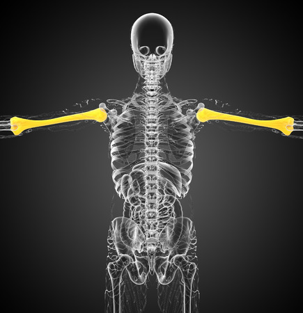 humerus: 3d render medical 3d illustration of the humerus bone - back view