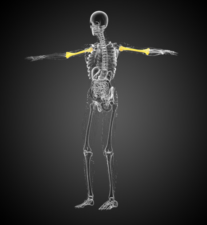 humerus: 3d render medical 3d illustration of the humerus bone - side view
