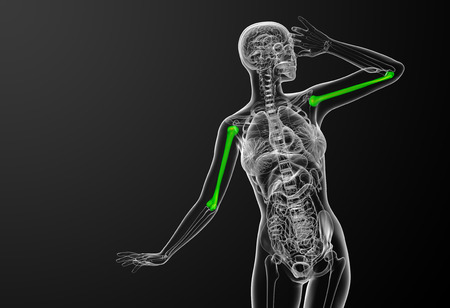 3d bone: 3d render medical illustration of the humerus bone Stock Photo