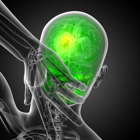 mandible: 3d render medical illustration of the skull - back view