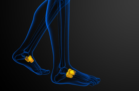 cuboid: 3d render medical illustration of the midfoot bone - side view