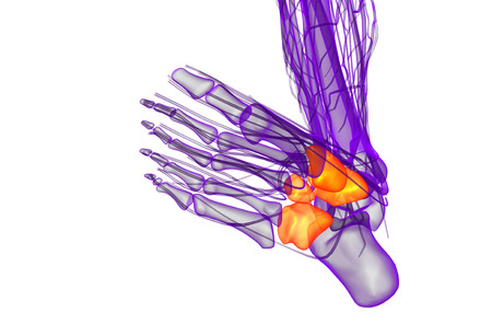 cuboid: 3d render medical illustration of the midfoot bone - bottom view
