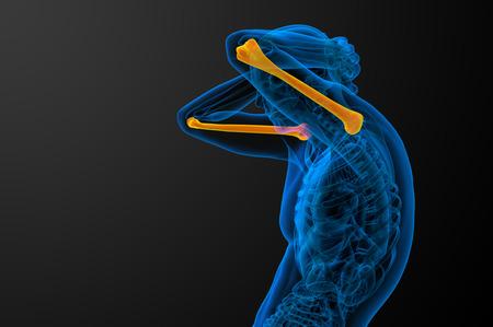 humerus: 3d render medical illustration of the humerus bone Stock Photo