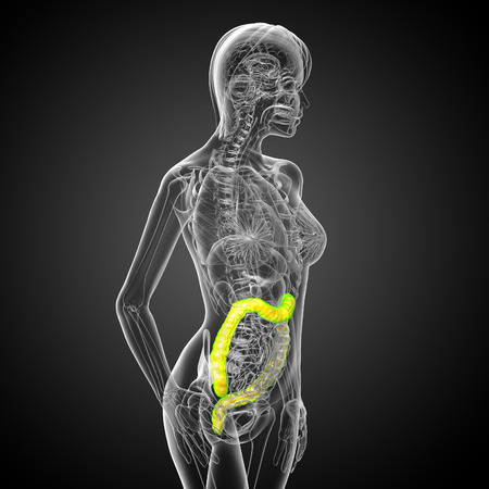 digestive disease: 3d render medical illustration of the human larg intestine - side view Stock Photo