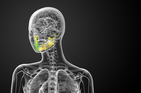 mandible: 3d rendered illustration - jaw bone - back view