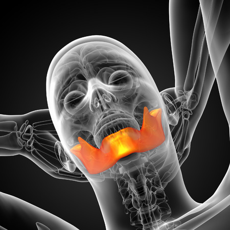 mandible: 3d rendered illustration - jaw bone - bottom view