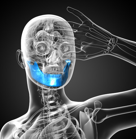 mandible: 3D medical illustration of the jaw bone - front view Stock Photo