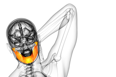 mandible: 3d rendered illustration - jaw bone - front view Stock Photo