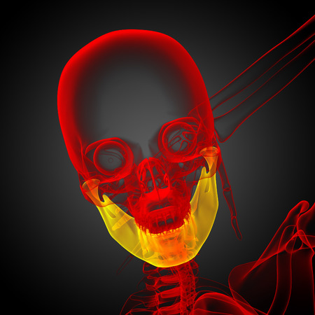 3d bone: 3d rendered illustration - jaw bone - front view Stock Photo