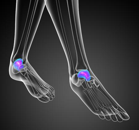 tendones: 3d ilustraci�n del hueso mal�olo - vista frontal Foto de archivo