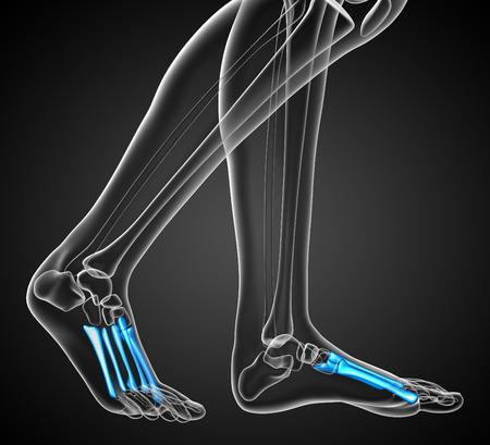 huesos humanos: 3d ilustración médica de los huesos metatarsianos - vista frontal