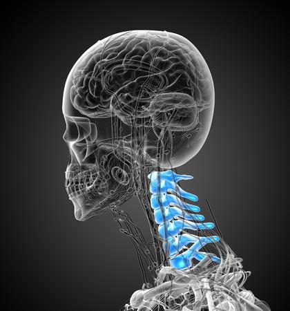 scheletro umano: 3D rendering illustrazione medica del rachide cervicale - vista laterale