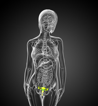 apparato riproduttore: 3D rendering illustrazione medica del sistema riproduttivo - vista frontale Archivio Fotografico