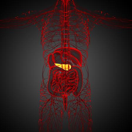 pancreatic: 3d render medical illustration of the  pancrease - back view