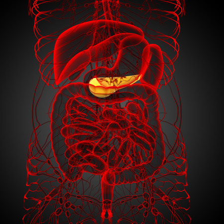 biliary: 3d render medical illustration of the  pancrease - front view