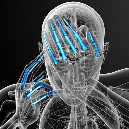 phalanges: 3d render illustration of the human phalanges hand - front view