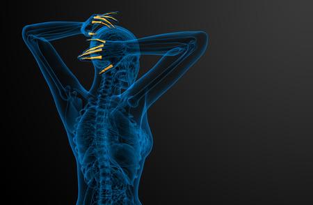 phalanx: 3d render illustration of the human phalanges hand - side view