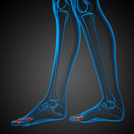 phalanx: 3d render illustration of the human phalanges foot - side view Stock Photo