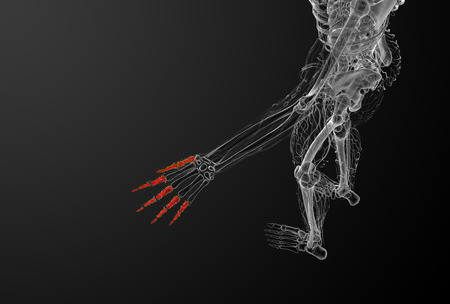 phalanx: 3d render illustration of the human phalanges hand - top view