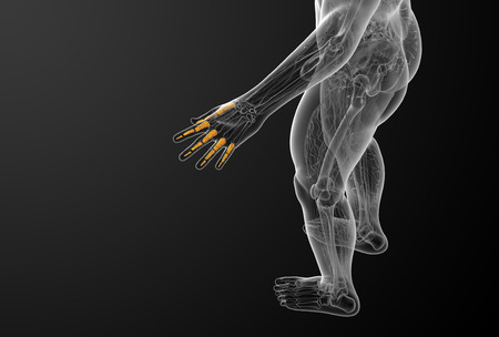 phalanges: 3d render illustration of the human phalanges hand - top view