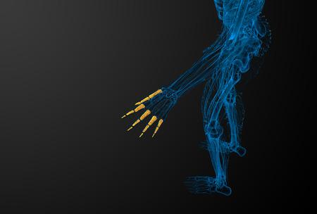 phalanges: 3d render illustration of the human phalanges hand - top view