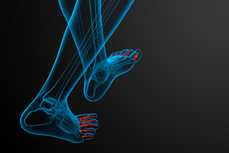 phalanges: 3d render medical illustration of the phalanges foot - back view