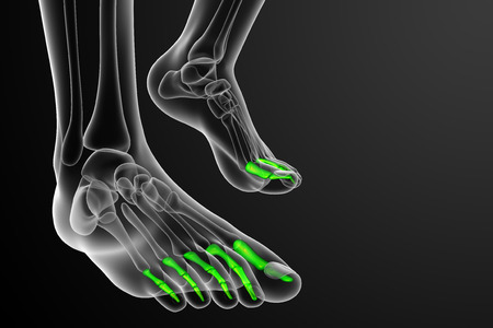 phalanges: 3d render medical illustration of the phalanges foot - front view
