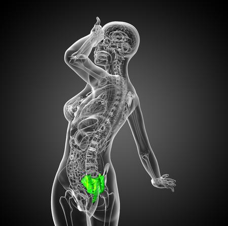 sacral: 3d render medical illustration of the female sacrum bone - side view