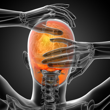 maxilla: 3d render medical illustration of the skull - back view