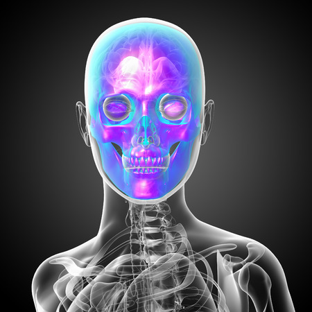 ethmoid: 3d render medical illustration of the skull - front view