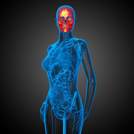 mandible: 3d render medical illustration of the skull - front view